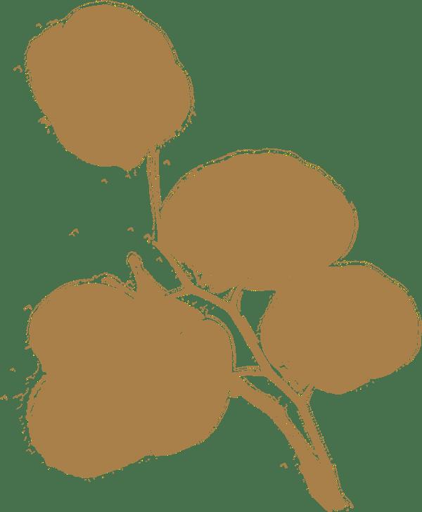Heilpflanze